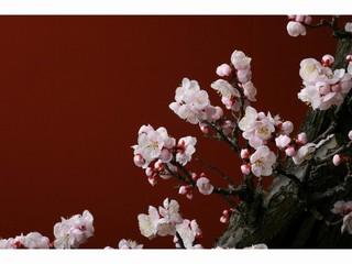 春を呼ぶ盆梅展 三密回避 チケット付きプラン