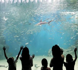 夏は水族館へ!【越前松島水族館入場券付】スタンダード和食会席プラン