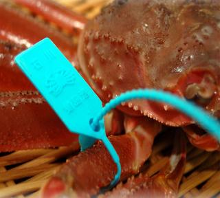 蟹天婦羅・蟹鍋・焼蟹・加能かにを使用した【蟹づくし会席】プラン