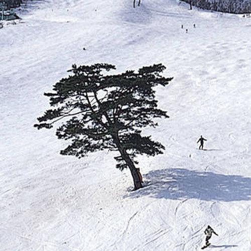 Тоёока - Miyamaso