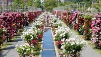 想像を超える美しさ】バラ祭満喫プラン(バラのカステラ&木靴絵付け・朝食付)