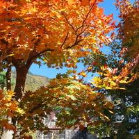 【秋グルメ】第1弾★松茸土瓶蒸し&栗釜飯☆秋の味覚を飛騨牛とともに…♪
