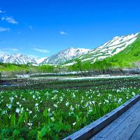 【前売リフト券付】信州の高原へ行こう!!きれいなマウンテンビューを白馬岩岳・栂池・八方で