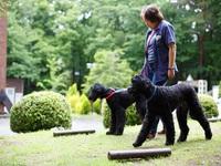 【早割30】愛犬(ペット)同伴ルーム!体にやさしい自然派フルコース料理!【さき楽】