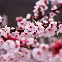 """【春の山菜尽くし】信州ならではの春の味を満喫!山々を眺めるレストランで""""森の恵み""""山菜尽くし会席を"""
