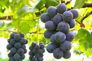【美味しいワイン召上れ☆】ボトル缶ワイン(赤・白)とカップがセット!ワイン付プラン♪