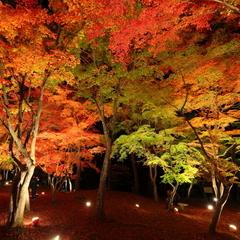 長瀞の紅葉・月の石もみじ公園【紅葉ライトアップ送迎付・車で5分】11月中旬から見頃です♪