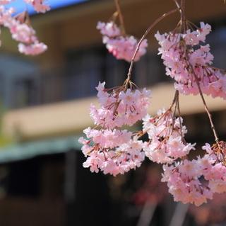 【カップルステイプラン】 お二人様限定・特典付の『ちちぶ二人旅』☆長瀞・長生館