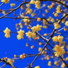 花のおもてなし長生館