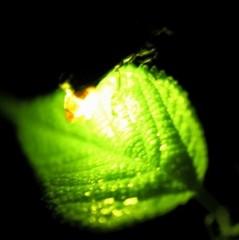 【期間限定】ホタル鑑賞送迎付プラン☆自然豊かなちちぶの山里☆天然のイルミネーションの世界へご案内♪