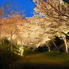 【花の長瀞】関東近郊で最後の夜桜鑑賞・送迎5分☆30種の八重桜ライトUP『通り抜けの桜』を見に行こう