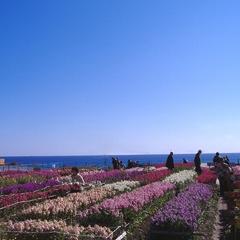 【花摘み&苺狩り】 満開のお花畑で花つみ&甘ーい春味のいちご狩り♪ 花苺チケット付プラン