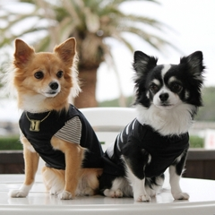 【わんちゃん記念日】 大切な記念日を皆でお祝い♪ わんちゃんのお食事など特典満載! 愛犬記念日プラン
