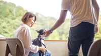 【ワンちゃん同伴OK】ドックランNEWOPEN!ペットは家族の一員!一緒に温泉宿へお泊りに行こう!