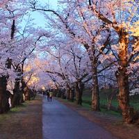 ●弘前公園&太宰治ゆかりの芦野公園の桜●お夕食は【会場食】♪春の和食会席プラン(2食付)