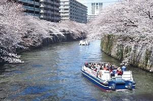 目黒川桜クルーズ 春を奏でるハーモニー