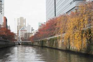 目黒川紅葉クルーズとホテル雅叙園東京「百段階段」