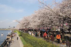 ANAインターコンチネンタルホテルのランチと桜の隅田川12橋めぐり