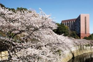 ホテル椿山荘東京 桜ブッフェと春の庭園