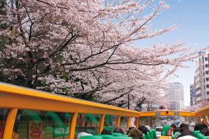 【2階建てオープンバス】東京さくら回廊
