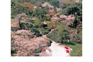隅田川桜堤と八芳園の桜会席