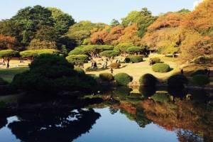 錦秋の新宿御苑と女性に人気のホテルブッフェ
