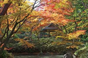 秋の庭園めぐりと大志満の季節御膳