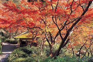 八芳園の紅葉御膳と秋色に染まる銀杏並木