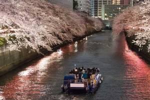 目黒川夜桜クルーズと世界のバイキング