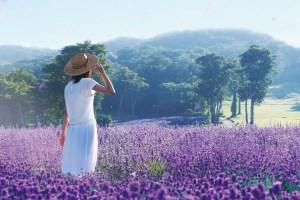 紫の楽園 たんばらラベンダーパークともも狩り