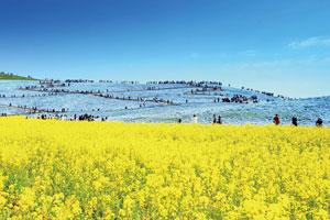 春の二大花名所!ひたち海浜公園とあしかがフラワーパーク
