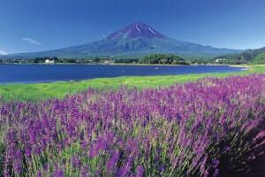 山梨さくらんぼ狩りとホテルマウント富士絶景フレンチ