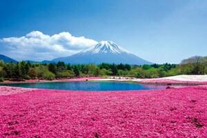 富士芝桜まつりと150年古民家山麓園で食す炉端焼き