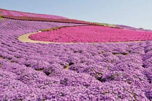 春の新定番!海鮮浜焼き食べ放題と東京ドイツ村25万株の芝桜