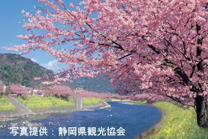 早春の訪れを告げる花巡り 河津ざくら・梅林めぐりといちご狩り