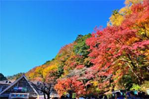 高尾山と奥多摩湖、紅葉の2大競演と澤乃井園でお買い物! 東京満喫日帰りバスツアー