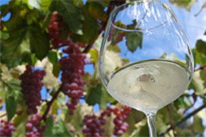 【35名限定】日本ワインの原点シャトー・メルシャンワイナリーと養老酒造を巡る  お昼はぶどうの丘で絶景ランチ! ワインと日本酒のマリアージュ・日帰りバスツアー
