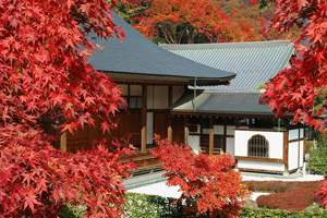 関東では珍しい「宝徳寺の床もみじ」と紅葉の崇禅寺&出流原弁天池見学バスツアー ~ひもかわうどん御膳のご昼食付~