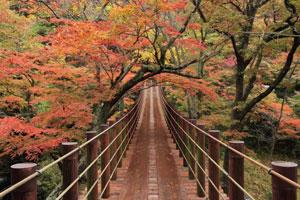 紅葉のトンネル「花貫渓谷」&長さ日本最大級「竜神大吊橋」の紅葉&「袋田の滝」観賞バスツアー