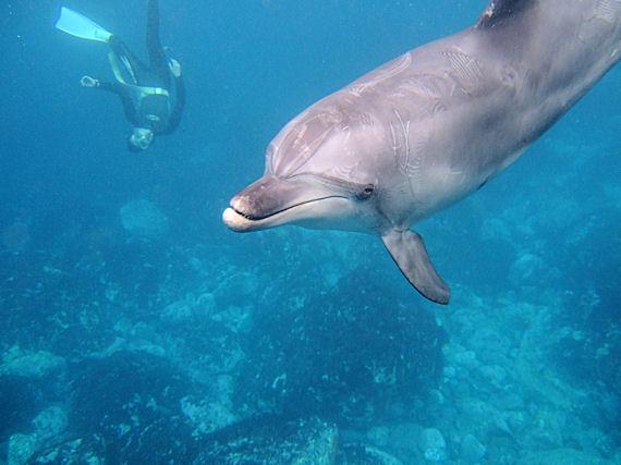 イルカの棲む島 東京から一番近い秘境 御蔵島