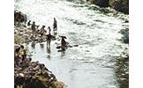 吉田川で涼む人々