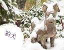 湯涌稲荷神社の狛犬