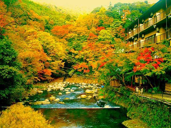 箱根温泉 鶴井の宿 紫雲荘