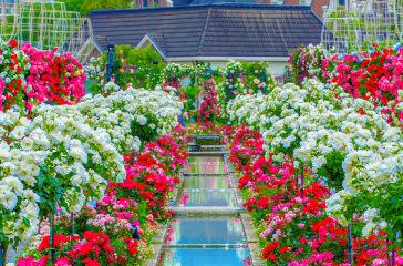 季節を五感で楽しむ!「花の街」